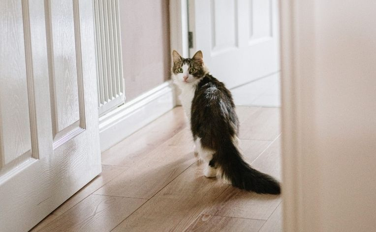What Is Cat Friendly Flooring, How To Get Cat Urine Out Of Laminate Flooring