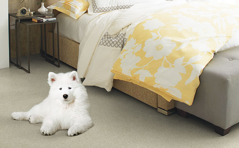 The Best Dog Friendly Flooring For Your Home Flooring