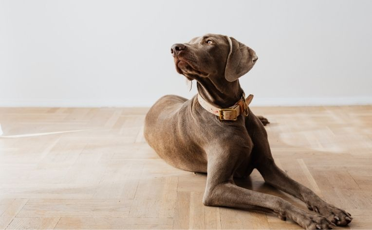 What S The Best Dog Friendly Flooring, Which Laminate Flooring Is Best For Dogs