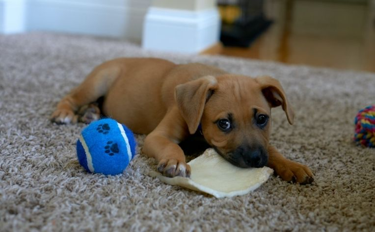 comfortable flooring options for dogs